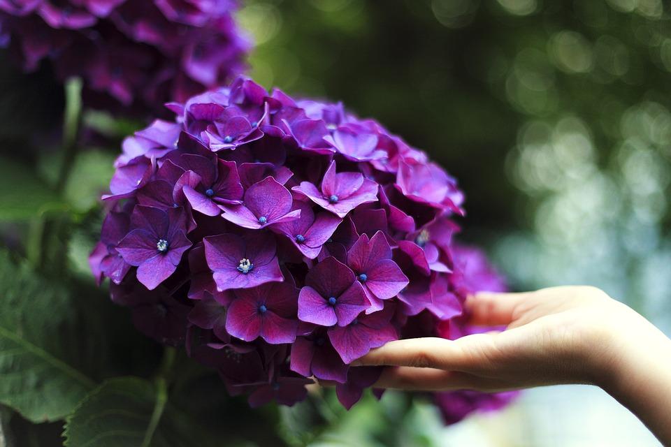 bloom-1853360_960_720
