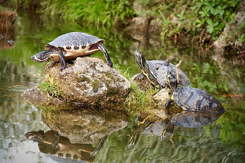 turtle-2405058_960_720