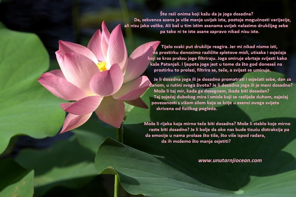 lotus-3207695_960_720