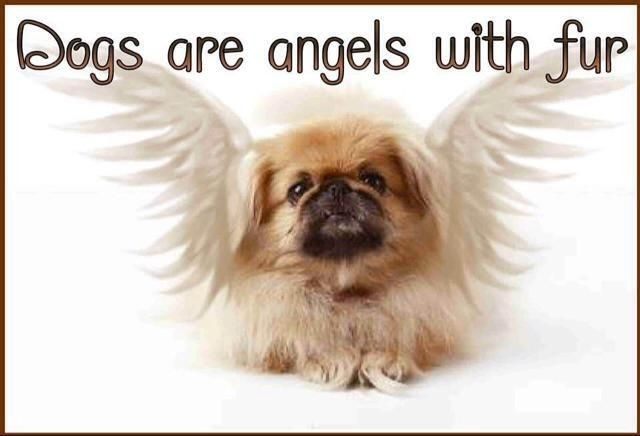 Dogs are angles with fur